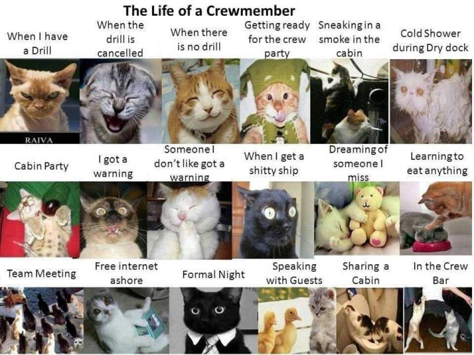 The Life of a Crewmember Cats